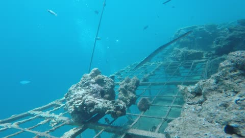 Fish swim in the Red Sea, colorful fish, Eilat Israel 10