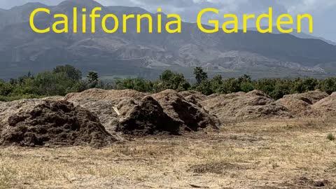 CALIFORNIA PILLARS