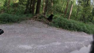 Motorcycle Rider's Friendly Black Bear Encounter