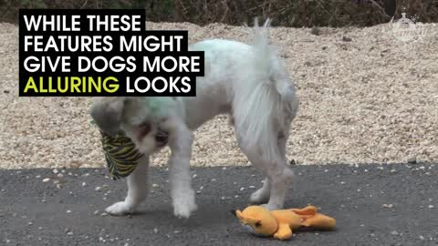 This Is What Humans Have Done To Dogs