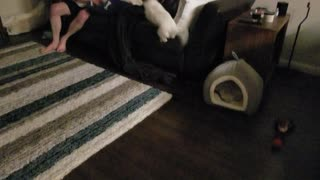 New puppy has zoomies!