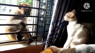 Cat vs monkey fight