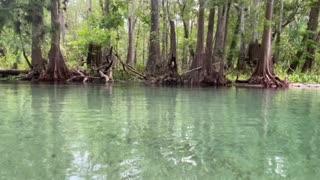 Ichetucknee Springs float trip