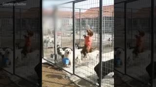 Smart cute puppy trying to escape from the cage