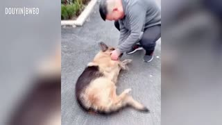 dog cries after reuniting with its handler