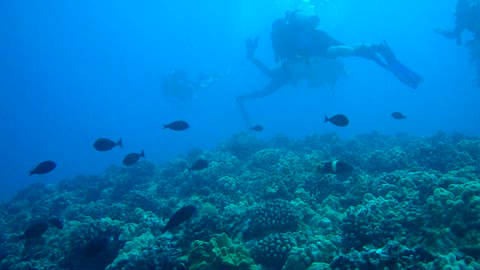 Sullivan's Reef Oahu, HI