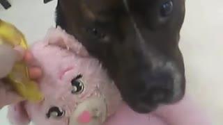 Dog hugs pink stuffed toy
