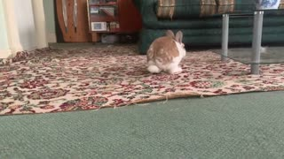 My Little Lilly rabbit | Cute Moment