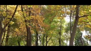 Autumn Videos with Music - Nature Videos