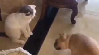 The funniest catsThe funniest cats