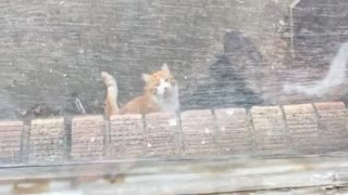 Dog scratching at window at orange cat on the floor