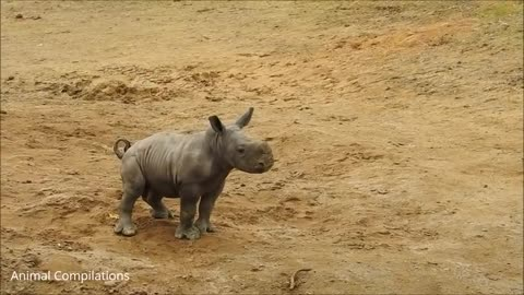 Baby Rhino Charging - FUNNIEST Compilations