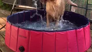 Puppy Pool With Added Fountain Fun
