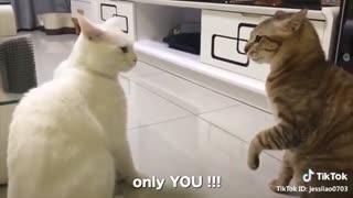 Cats talking like people