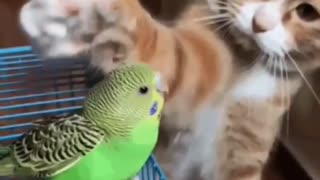 a cat is friends with a parrot