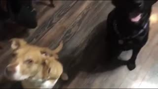 Dog tells on her friend when asked who is guilty