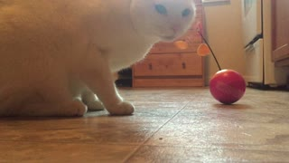How to entertain your cat 2: Major Electric Laser