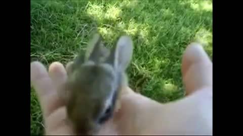 Baby Bunny Rabbits Binky CUTEST Compilation