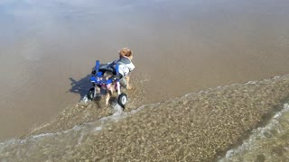 Disabled Doggy Enjoys Time at the Beach Being a Land Shark