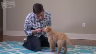 3 Things to teach your new puppy.