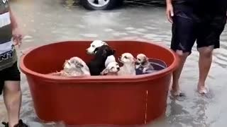 Victims of Hurricane Hanna manage to rescue all their dogs