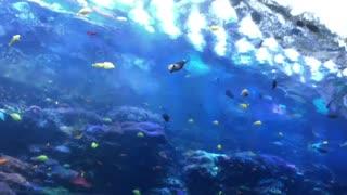 Coral Reef Exhibit