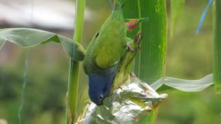 Ave parrot is beautiful and nature