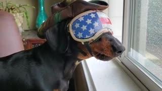 Most American dog ever keeps an eye on the neighborhood