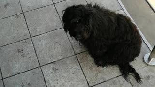 Black dog on the street.