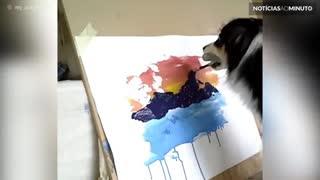 Conheça Secret, a cadela com talento para pintura