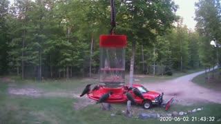 Lots of Hummingbirds