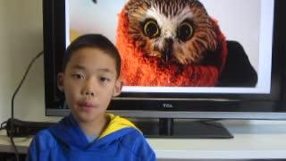 Home Schooler News Show _ Owl under Christmas tree