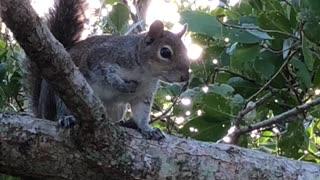 Cute squirrel encounter
