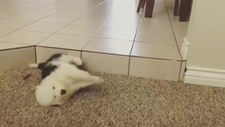 Puppy falls off step with adorable little flop