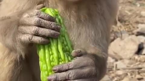 Funny monkeys 🙈 😂