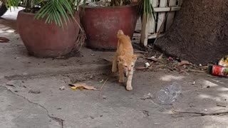 My little Cat is playing