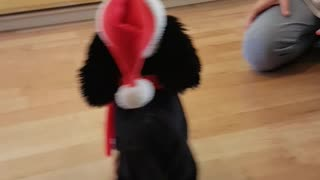 Dogs extremely confused by dancing Christmas toy