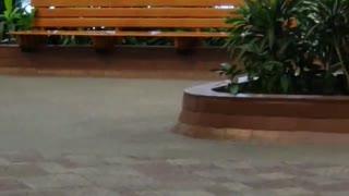 Moose Strolls Through Hospital