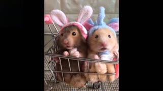 Cute And Funny Acting Pets Compilation