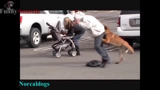 Dogs better than guns,
