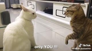 ENGLISH SPEAKING CATS!!!!