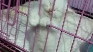 Kitten Falls Asleep Standing Against Kennel
