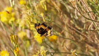 Butterfly Flying Away