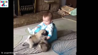 Sweet dog's reaction to adorable baby for the first time is priceless