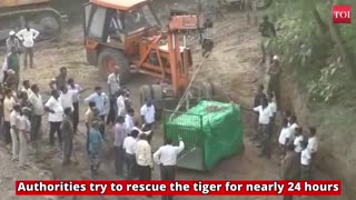 Tiger died after failed rescue mission