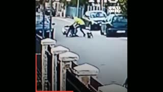 Cute Brave Dog Saved A Girl's Life