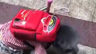 Cute Dog Moving Like A Human