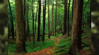 Sound of forest and animals to relax