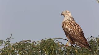 Watch a hawk peeking around with great music