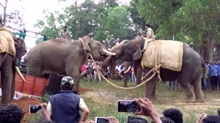 Elephant fight @ hassan